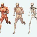 Kaj se dogaja v vašem telesu med vadbo?
