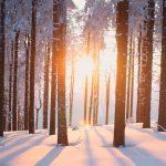 Zima je obdobje, ko si telo nabira moč